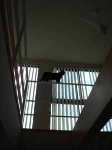 瑞穂中根の家 猫.jpg
